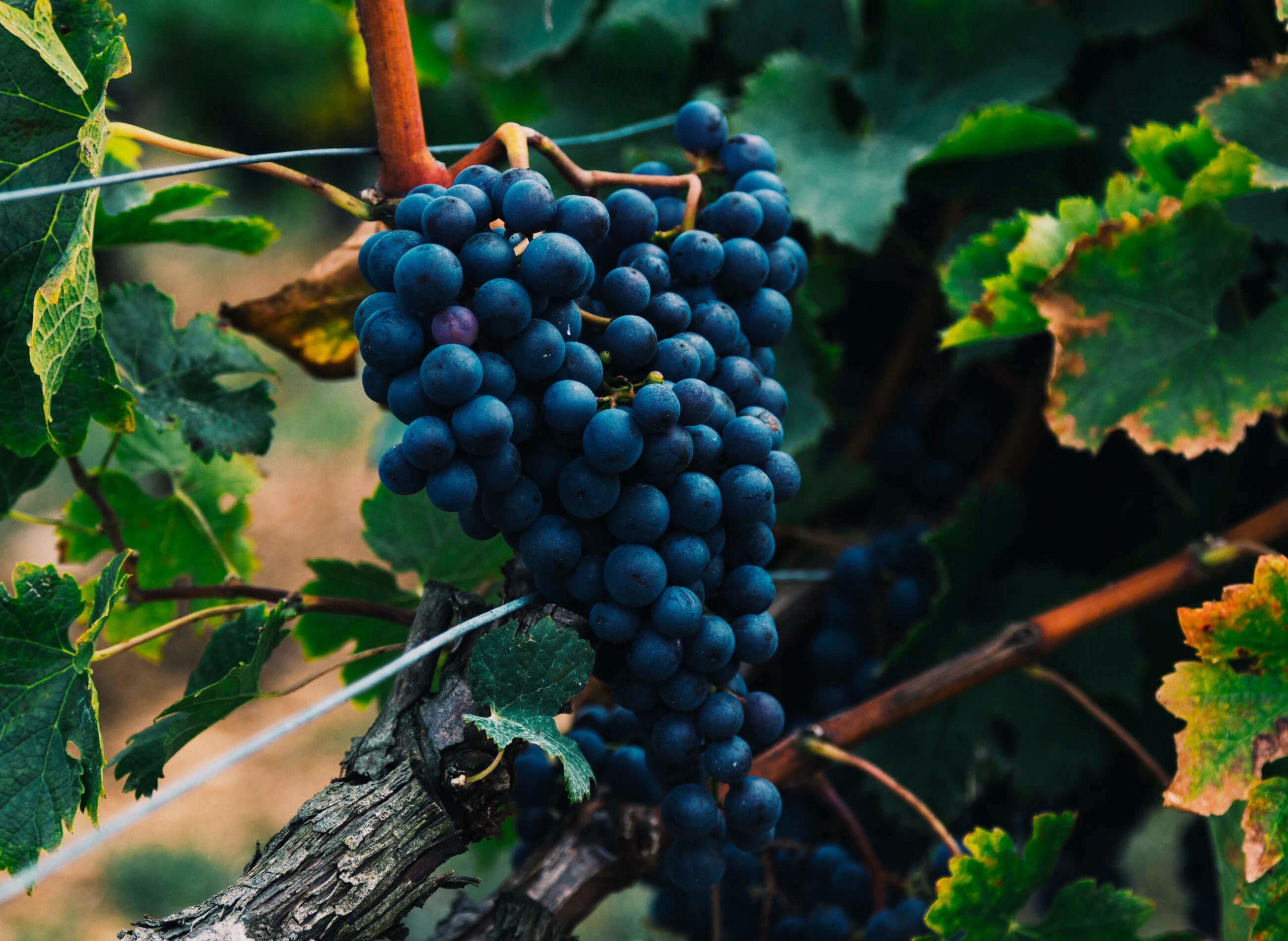 beauty-of-winemaking